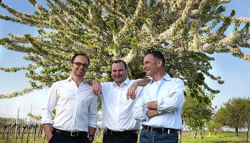 Zantho trio kirschbluete